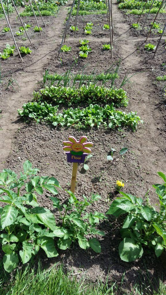 tuin van floor
