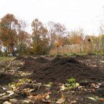 compost 1